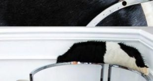 Simple tips for padding a chair with cowhide